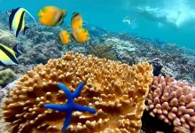Photo of The uniqueness of exploring the Bali snorkelling tour